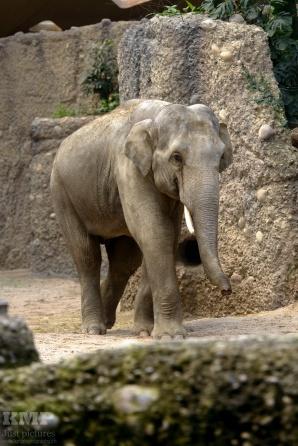 Thailändischer Elephant