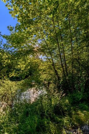 Die Töss bei Kemptthal